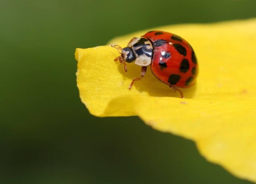 Beautiful Beetle Theory