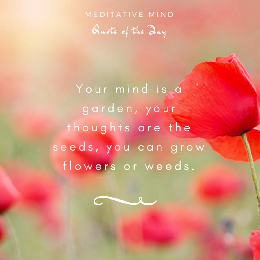 Daily Quote Mindfulness Meditative Mind - Your mind is a garden, your thoughts are the seeds, you can grow flowers or the weeds